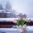 bouquet isabelle